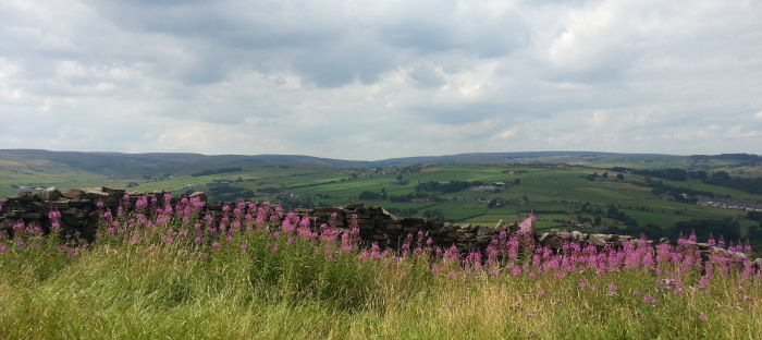View of Bronte Country